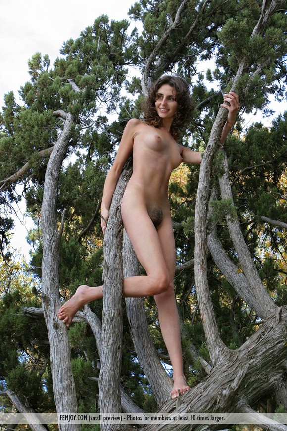 sambella-in-tree-of-life